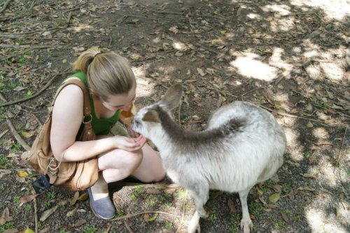 I even got to snuggle a few Kangaroos while I was there!
